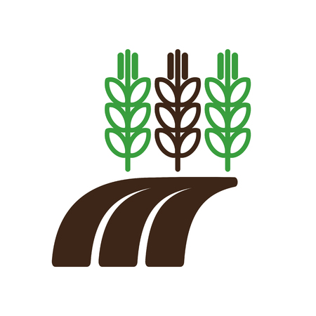 barley field: Ears of Wheat, Barley or Rye on field icon outline
