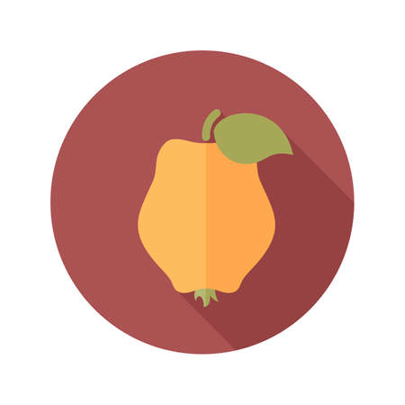 quince: Quince flat icon. Tropical fruit. Illustration