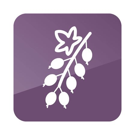 currant: Currant outline icon. Fruit. Vector illustration, Illustration