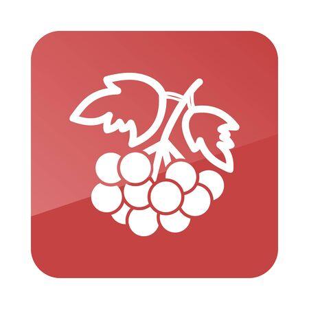ashberry: Rowan branch outline icon. Berry fruit. Vector illustration, Illustration