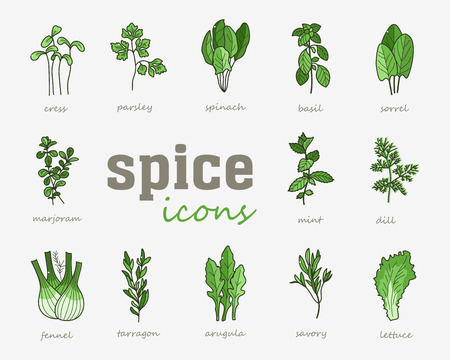 Greenery vector icon. Vegetable green leaves. Culinary herb spice for cooking, medical, gardening design. Organic product flavor ingredient for label, sign, illustration Illustration
