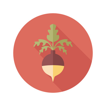 turnip: Rutabaga or Swede flat icon. Vegetable root vector illustration