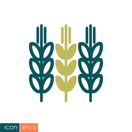 Spikelets and grains of wheat icon vector illustration