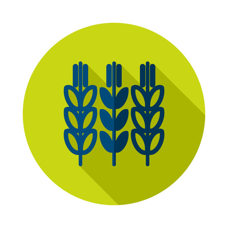 Spikelets and grains of wheat icon. Agriculture sign. Graph symbol for your web site design, icon, app, UI.