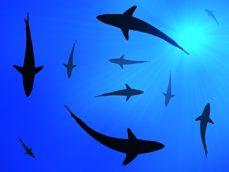 sun from underwater: Sharks background Stock Photo