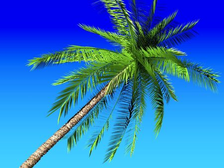 Coconut palm tree on blue sky  photo