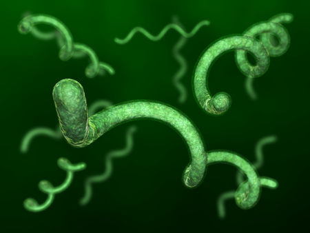 Spirillum bacteries Stock Photo