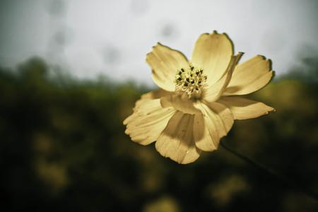 혼자하는 꽃