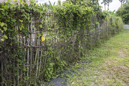 bunched: bunched bamboo fence in farm land