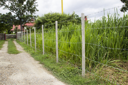 barbed wire fence in countryside of Thailand photo