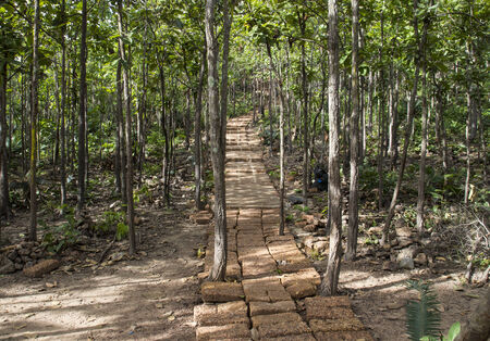stairway made from brick in the forest photo