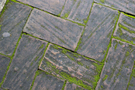 sidewalks: moss growing between brick pavement for background