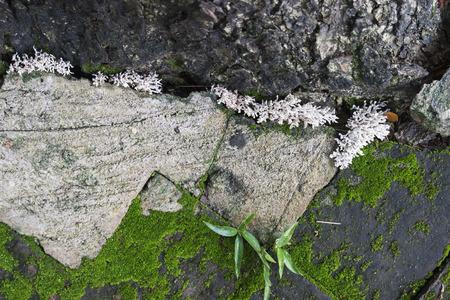 moss growing between brick pavement near the trunk photo