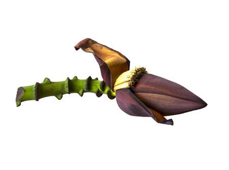 banana flower blossom and stem isolated on white background photo