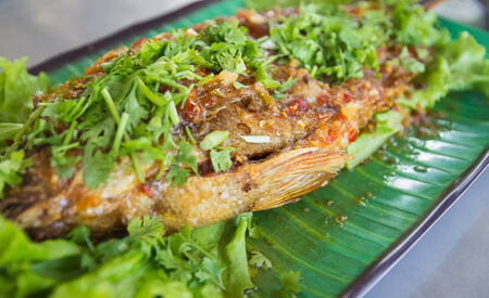 fried fish with spicy sauce, lettuce and parsley photo