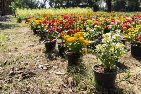 plot: colorful blooming flowers in flower plot Stock Photo