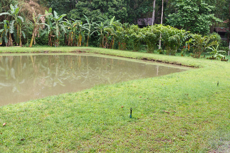 waterside: the pond with the banana tree and sprinkler at waterside