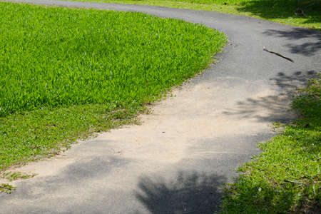 pedestrian walkway: pedestrian walkway and tree in the park