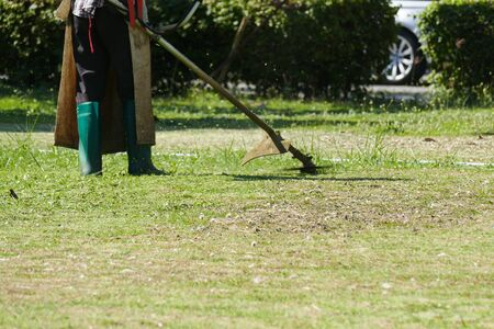cut grass: The man using lawn mower to trim and cut grass on lawn yard Stock Photo