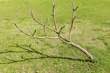 leafless: dry leafless branch of the tree on lawn yard Editorial