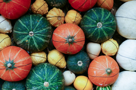 white, green and orange pumpkin, gourd for abstract texture background