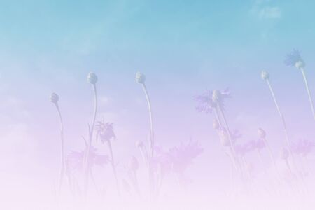 button grass: purple Cornflower or Bachelors Button meadow with blue sky background (color filter and soft focus) Stock Photo