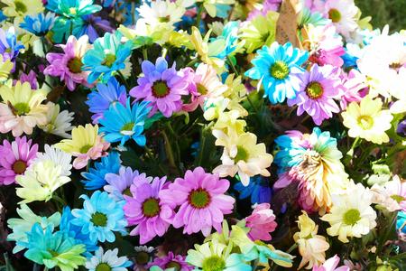 ramo de flores: bouquet of blooming colorful flower for decoration Foto de archivo