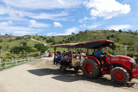 december 31: Phayao, Thailand - December 31, 2015: tourist on rickshaw travel in sunflower field on the mountain at Mon Tantawan Phayao, Thailand on December 31, 2015. Editorial