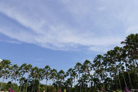 palmier: haut de palmier et le ciel bleu