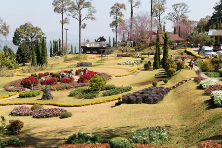 jardines con flores: Chiang Mai, Tailandia - 8 de febrero de, 2016: El viaje tur�stico para ver la floraci�n de la flor de cerezo silvestre del Himalaya en el Royal Centro de Chiang Mai de Investigaci�n Agr�cola (Khun Wang) en Chiang Mai, Tailandia el 8 de febrero de 2016.