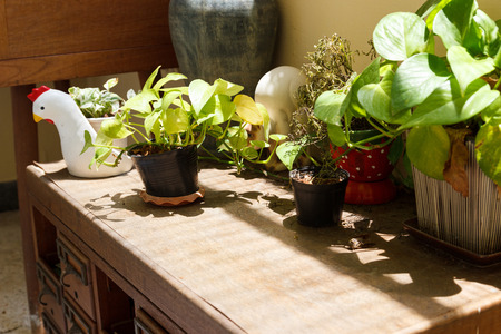 wood figurine: plant in the pot on old wooden desk drawer Stock Photo