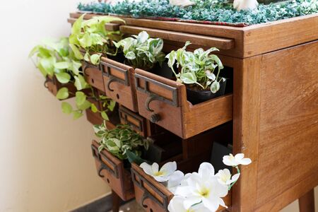 drawer: plant growing in wooden desk drawer