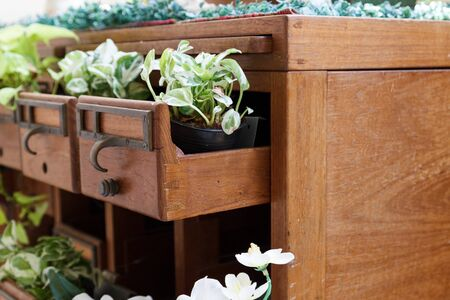 plant growing in wooden desk drawer