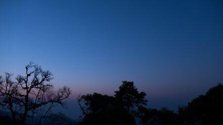 tree  forest: tree silhouette and mountain view at dawn