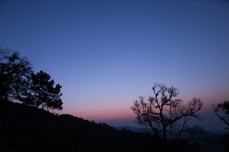 beautiful tree: tree silhouette and mountain view at dawn