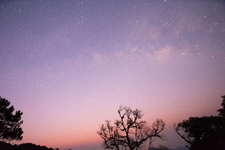 beautiful tree: milky way and star with tree silhouette at dawn