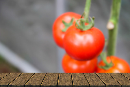 wood agricultural: blurry defocused ripe red tomato in organic agricultural farm (blur background with wood table top for display or montage your product)