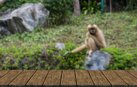 biped: white handed gibbon sitting on a rock (blur background with wood table top for display or montage your product) Stock Photo