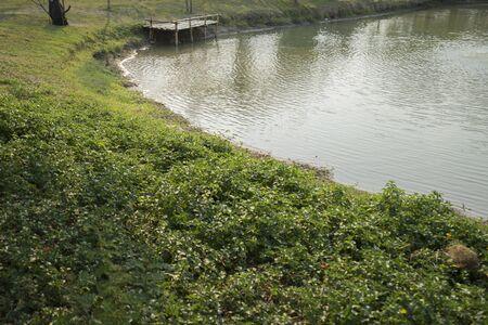 waterside: pier at waterside of pond in park