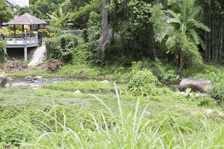 gazebo: gazebo beside water stream of creek in tropical forest