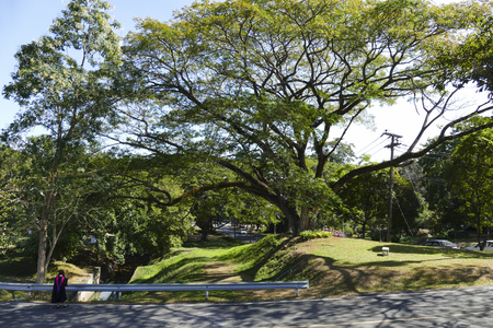 academic gown: Chiang Mai, Thailand - December 23, 2015: woman in academic gown standing on the road beside big tree at Chiang Mai university in Chiang Mai, Thailand on December 23, 2015. Editorial