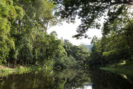 beside: landscape scenary of forest beside pond lake