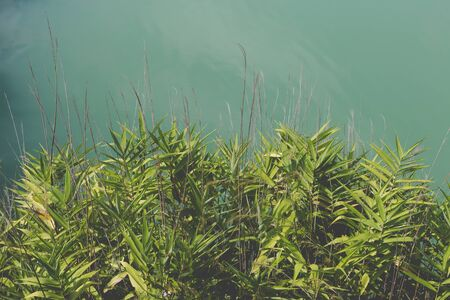 plant and grass leaves beside green pond lake Stock Photo