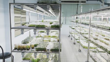 plant tissue culture growing in a bottle on shelf in laboratory - botanic nursery Stock Photo