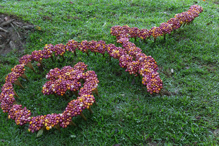 flower decoration on grass lawn yard for Traditional Thai alphabet number nine Stock Photo