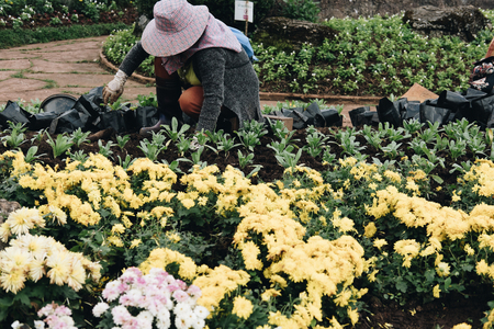 gardener planting flower in garden. woman growing plant with dirt or soil at back yard