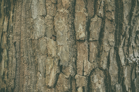 brown tree bark surface abstract texture background Stock Photo