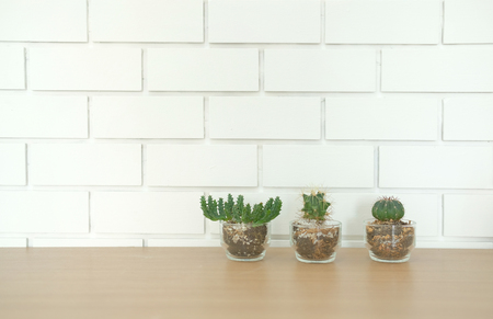 succulent cactus plant in pot decorating on wooden desk table near white brick wall
