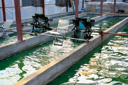 spirulina farm. algae farming for dietary supplement production
