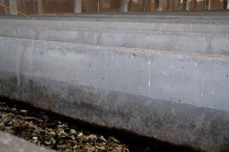 earthworm for producing organic manure compost fertilizer vermicompost